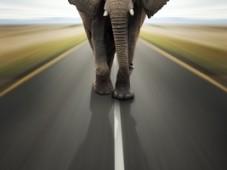 Elephant-Thick-Skin-3691880
